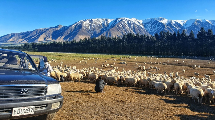 farm tour, sheep farm tour, canterbury sheep farm tour, christchurch farm tour, christchurch sheep farm tour, new zealand farm tour, nz farm tour, benlea farm tour, new zealand, nz tourism